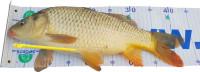 AKCIA podložka pod ryby/meter(130×15)/uvoľňovač háčikov